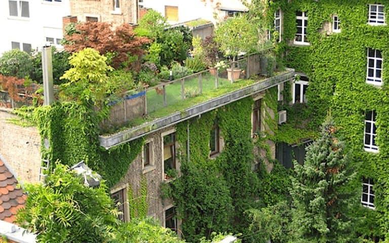 Les dépenses d'entretien des toitures et façades végétalisées peuvent-elles être considérées comme des charges locatives récupérables ?
