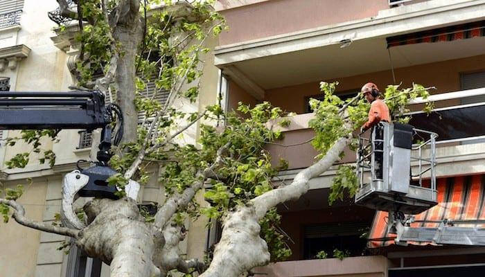 Abattage d'un arbre situé sur une propriété privée