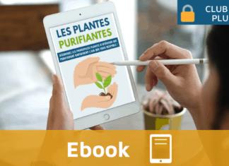 Ebook Monimmeuble Les plantes purifiantes